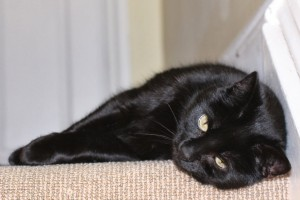 Black cat resting on a comfy carpet